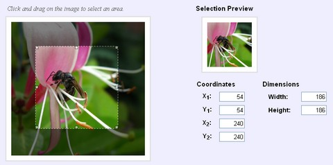 Easy jQuery Image Cropping with imgAreaSelect